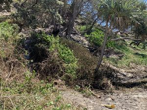 Image of fire damage at Teewah beach.